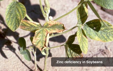 Zinc Deficiency