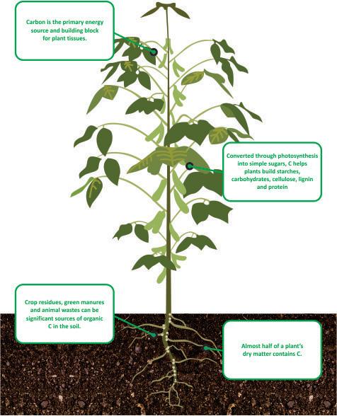 nutrient facts Carbon