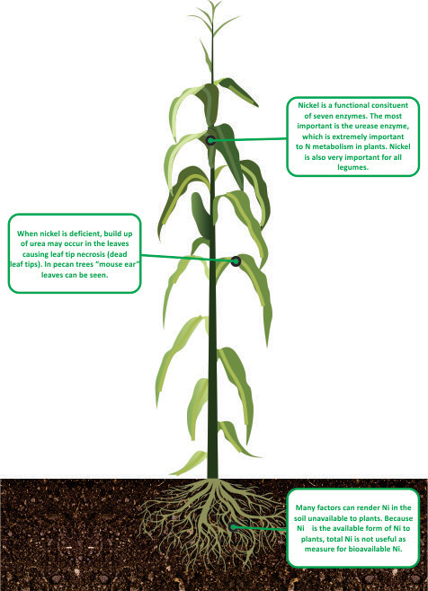 nutrient facts Nickel